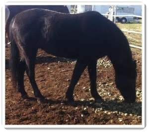 Pony - Other Mix for adoption in Sac, California - June Bug