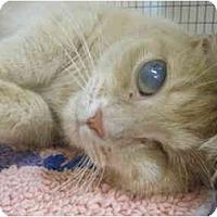 Adopt A Pet :: Grizzly Addison - Deerfield Beach, FL