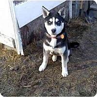 Adopt A Pet :: Magu - Jacksonville, NC