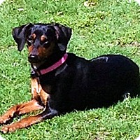 Adopt A Pet :: Princess - Glenpool, OK
