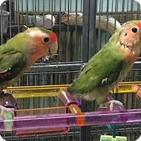 Adopt A Pet :: Corona, KC and Dino - Woodbridge, NJ