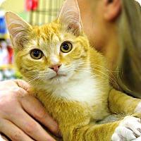 Adopt A Pet :: Leo - Pittstown, NJ