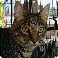 Adopt A Pet :: Jesse - San Fernando Valley, CA