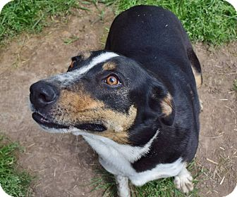 Collie Mix Dog for adoption in Iola, Texas - Charro