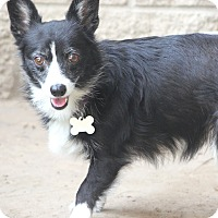 Adopt A Pet :: Maybelline - Norwalk, CT