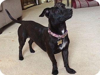Dachshund Mix Dog for adoption in Savannah, Georgia - Darla
