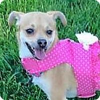 Adopt A Pet :: Scarlet - Oakley, CA