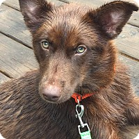 Adopt A Pet :: Tasha - CUMMING, GA