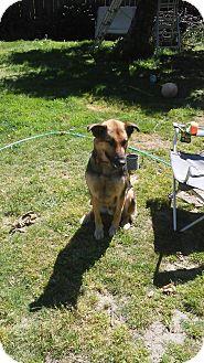 German Shepherd Dog/Mixed Breed (Large) Mix Dog for adoption in Salem, Oregon - Keiko