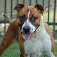Adopt A Pet :: PRINGLES - Los Angeles, CA