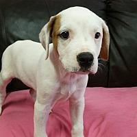 Adopt A Pet :: Angelina - Pensacola, FL
