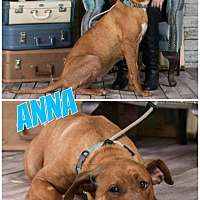 Adopt A Pet :: Anna - Edmonton, AB