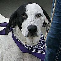 Adopt A Pet :: Clyde - Beebe, AR