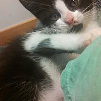 Adopt A Pet :: Cosmo - Trenton, NJ