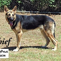 Adopt A Pet :: Cheif---Courtesy Listing - Fort Worth, TX