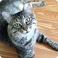 Adopt A Pet :: Capt Jack - Port Republic, MD