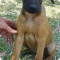 Adopt A Pet :: Lexie so sweet - Sacramento, CA