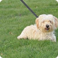 Adopt A Pet :: Prince - Tumwater, WA