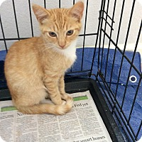 Adopt A Pet :: OJ - San Ramon, CA