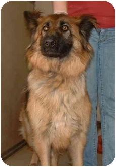 German Shepherd Dog Mix Dog for adoption in Honesdale, Pennsylvania - Nickie