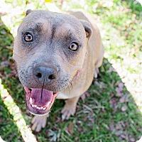 Adopt A Pet :: Valentine - Austin, TX