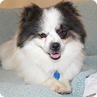 Adopt A Pet :: Blue- I have a video! - Temecula, CA