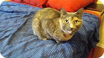 Calico Cat for adoption in Exton, Pennsylvania - Lady J (GV)