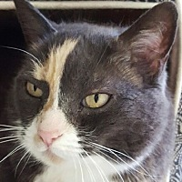 Adopt A Pet :: Eden - Auburn, CA