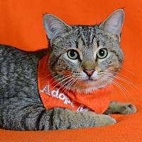 Adopt A Pet :: Chow - Jackson, MS