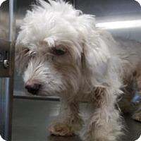 Adopt A Pet :: Jessica - Picayune, MS