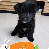 Adopt A Pet :: Lea - los angeles, CA