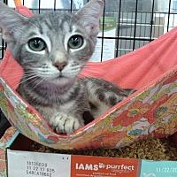 Adopt A Pet :: Chastity - Houston, TX