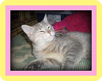 Domestic Shorthair Cat for adoption in Medford, Wisconsin - TAYLEE