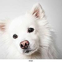 Adopt A Pet :: Roger - New York, NY