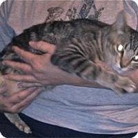 Adopt A Pet :: Rollo - Colorado Springs, CO