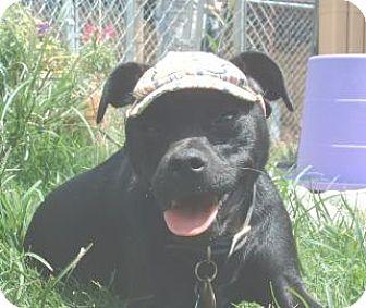 Terrier (Unknown Type, Medium) Mix Dog for adoption in Columbus, Georgia - Dodger 440C