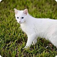 Adopt A Pet :: Hook - San Antonio, TX