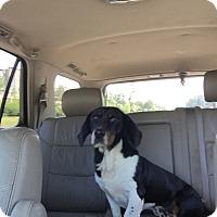 Adopt A Pet :: Arnie - Northport, AL