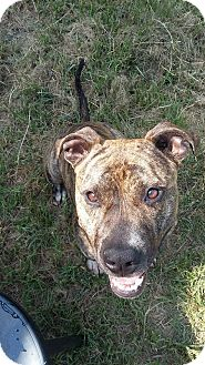 Terrier (Unknown Type, Medium) Mix Dog for adoption in Williamsburg, Virginia - TOOD
