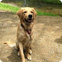 Adopt A Pet :: Tyler - Yorktown, VA