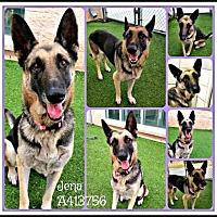 Adopt A Pet :: JEN - SAN ANTONIO, TX
