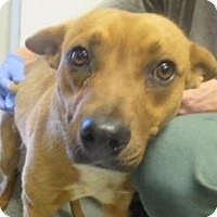 Adopt A Pet :: Justin - Lincolnton, NC