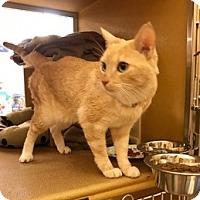 Adopt A Pet :: MCKITTY - Brea, CA