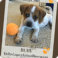 Adopt A Pet :: RUBY - Lincoln, NE