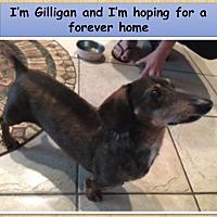Adopt A Pet :: Gilligan - Jacobus, PA