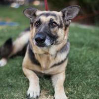 Adopt A Pet :: Whitney - Fresno CA, CA