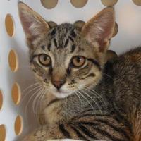 Adopt A Pet :: Chipotle - Jackson, MI
