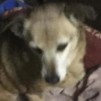 Adopt A Pet :: Pudgie - Fillmore, IN