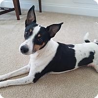 Adopt A Pet :: Oskar - Wisconsin Dells, WI