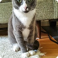 Adopt A Pet :: Gwyn - Oakland, CA